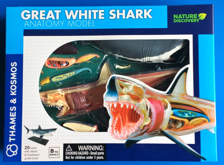 Thames & Kosmos Great White Shark Anatomy Model | Science ...