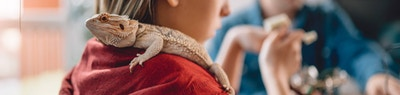 A Guide to Caring for Your First Lizard