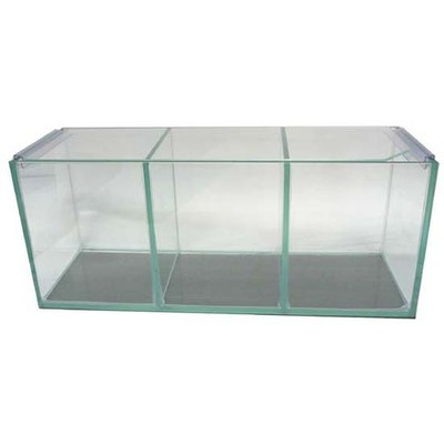 Petworx Fighter Tank Trio Polished Corners 3 Bay Betta Fighing Fish