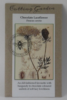 Backyard Garden Enthusiast Chocolate Lace Flower, Daucus carota