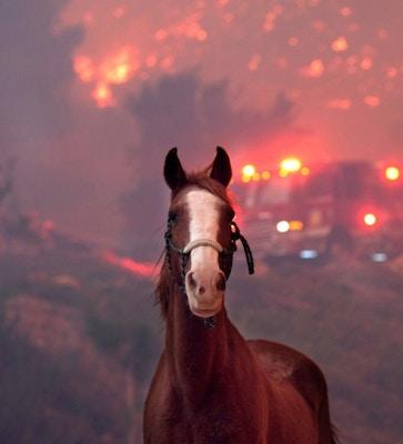 SMOKE INHALATION IN HORSES – REDUCE THE DAMAGE