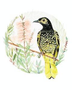 Wishful - Regent Honeyeater Fine Art Print