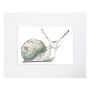 Garden Snail Print - Mounted in 20cm x 25cm Mount mat