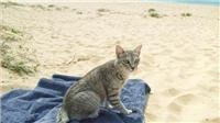 Carla and her cat find genuine pet friendly accommodation close to Sydney