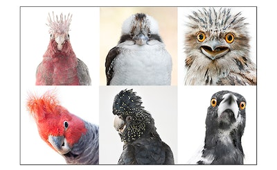 Feathered Heads - Set of 6 bird cards