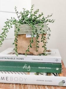 Mini Pot Plant Cover - Green Bottom Line Reversible Hessian