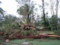 Tonnes of trees to shift after Cyclone Larry
