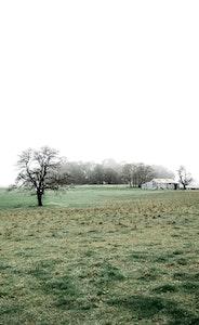 Misty Farm