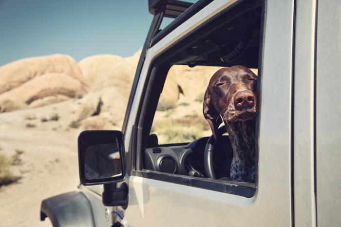 jeep_dog_overland_offroad_automotive-dometicglobalwebtransparentpng24800800-png