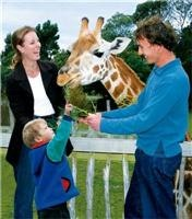 Orana Wildlife Park Christchurch Giraffe feeding
