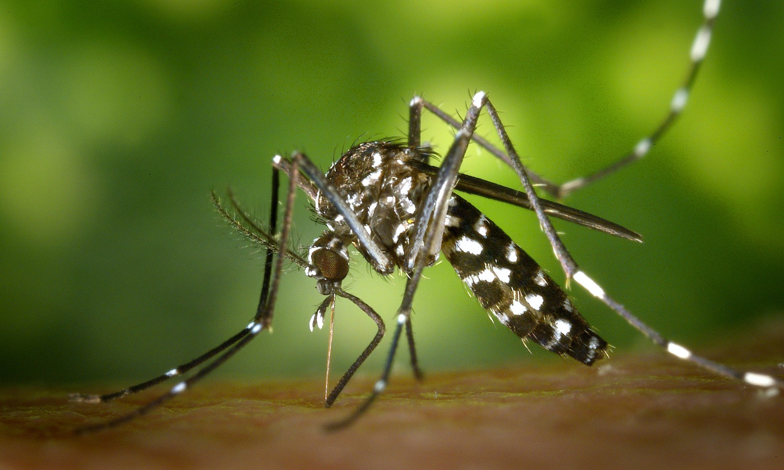 Why do Mosquitoes Bite Me and Not Others?