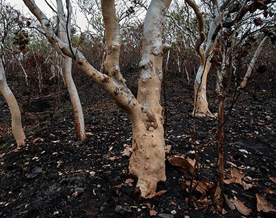 How to prepare your property for a bushfire