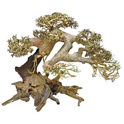Aqualife Bonsai Driftwood 60x40cm
