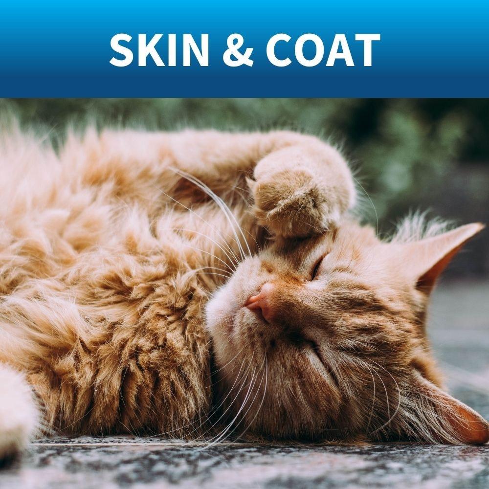 shop cat shampoo and conditioner