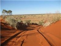 North side  of a Canning Stock  Route sand dune