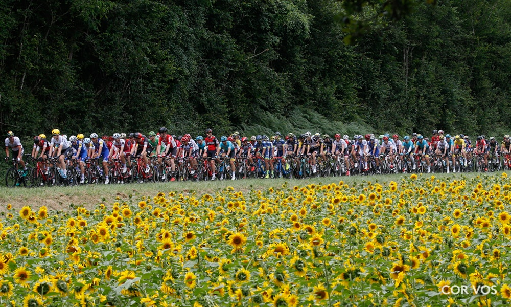 peloton-sunflower-fields-stage-ten-2017-tour-de-france-jpg