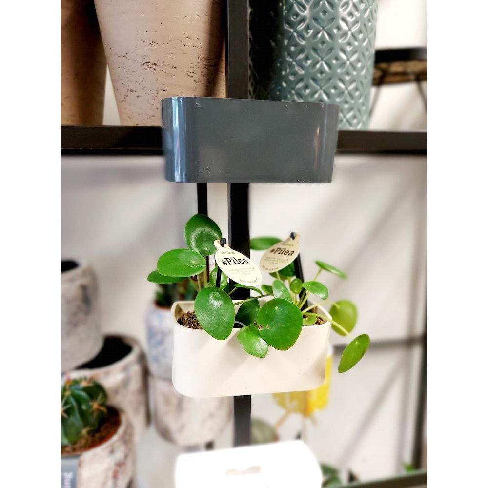 Pretty Cactus Plants  Magnetic Trough Pot - 13.8 Cm - White