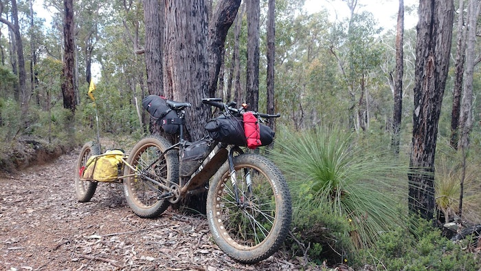 Fat bike in bush