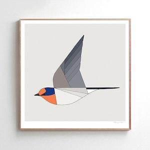 Welcome Swallow in flight
