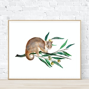 Jo Jo the Ringtail Possum - Archival Print