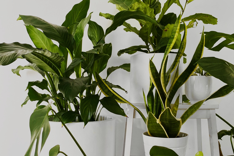 Never Say Die! Six Hassle Free Indoor Plants