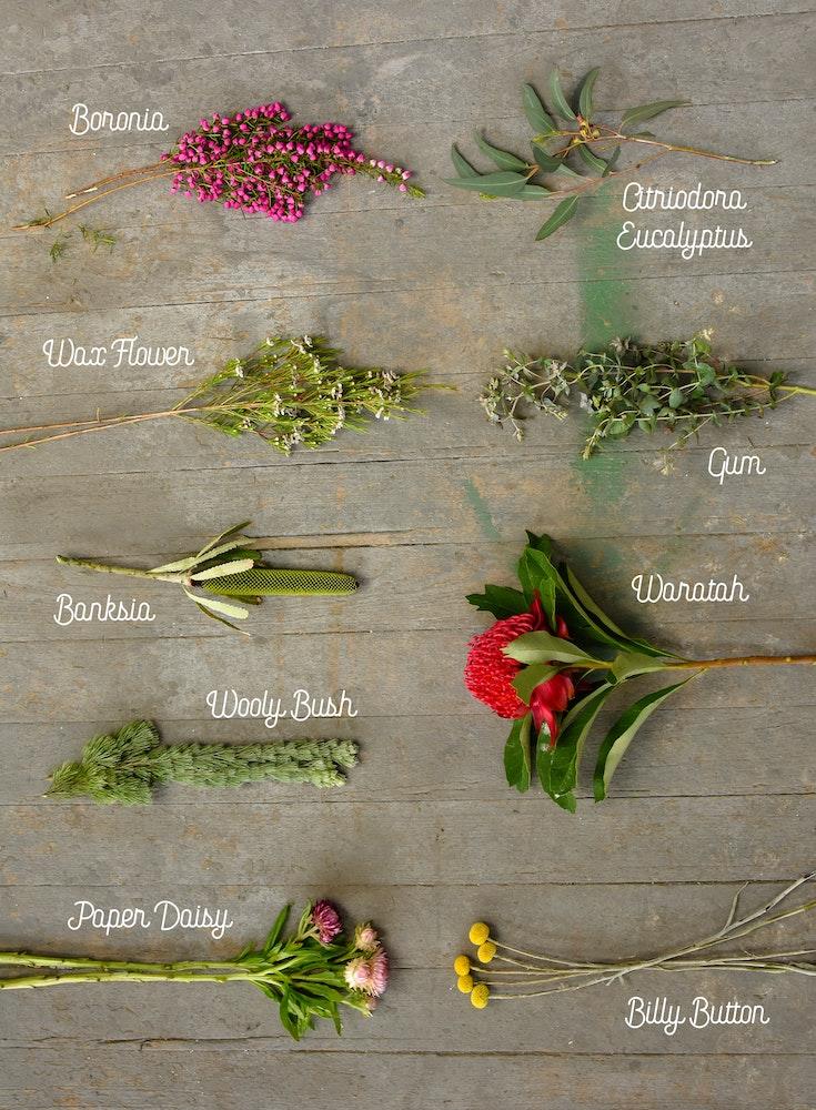 australian-native-wildflower-species-jpg