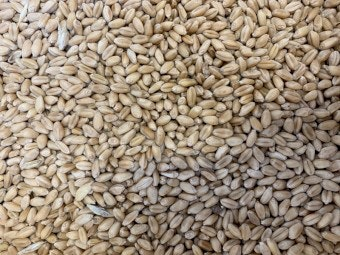 Grenfell Wheat Hard 20kg