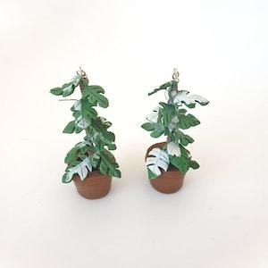 Raphidophora tetrasperma earrings