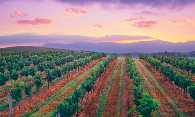 A Guide to the Hunter Valley