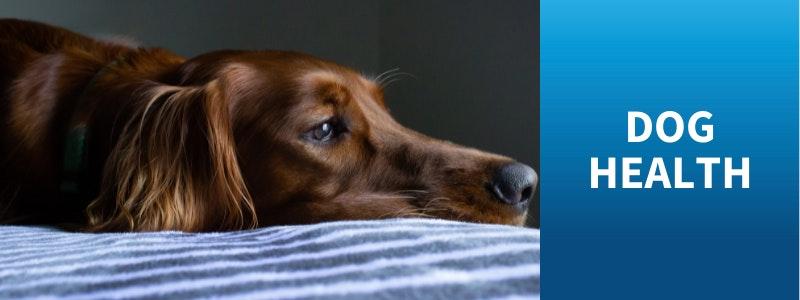 Watch Bondi Vet Dog Health Stories