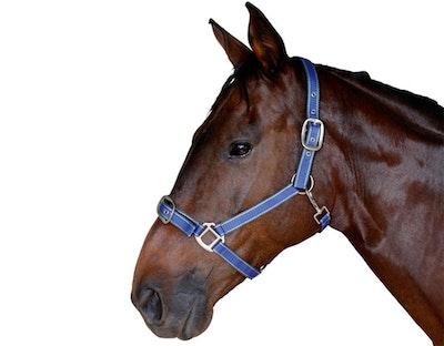 CARIBU Quick Release Horse Halter