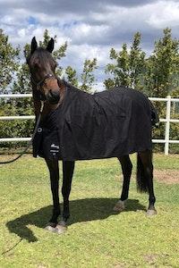Diamond Deluxe Horsewear Cotton Drill Rug