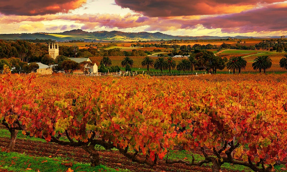 A Guide to the Barossa Valley