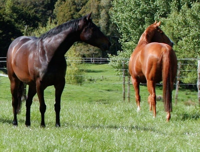 Why our horses need Humic + Fulvic in their diet