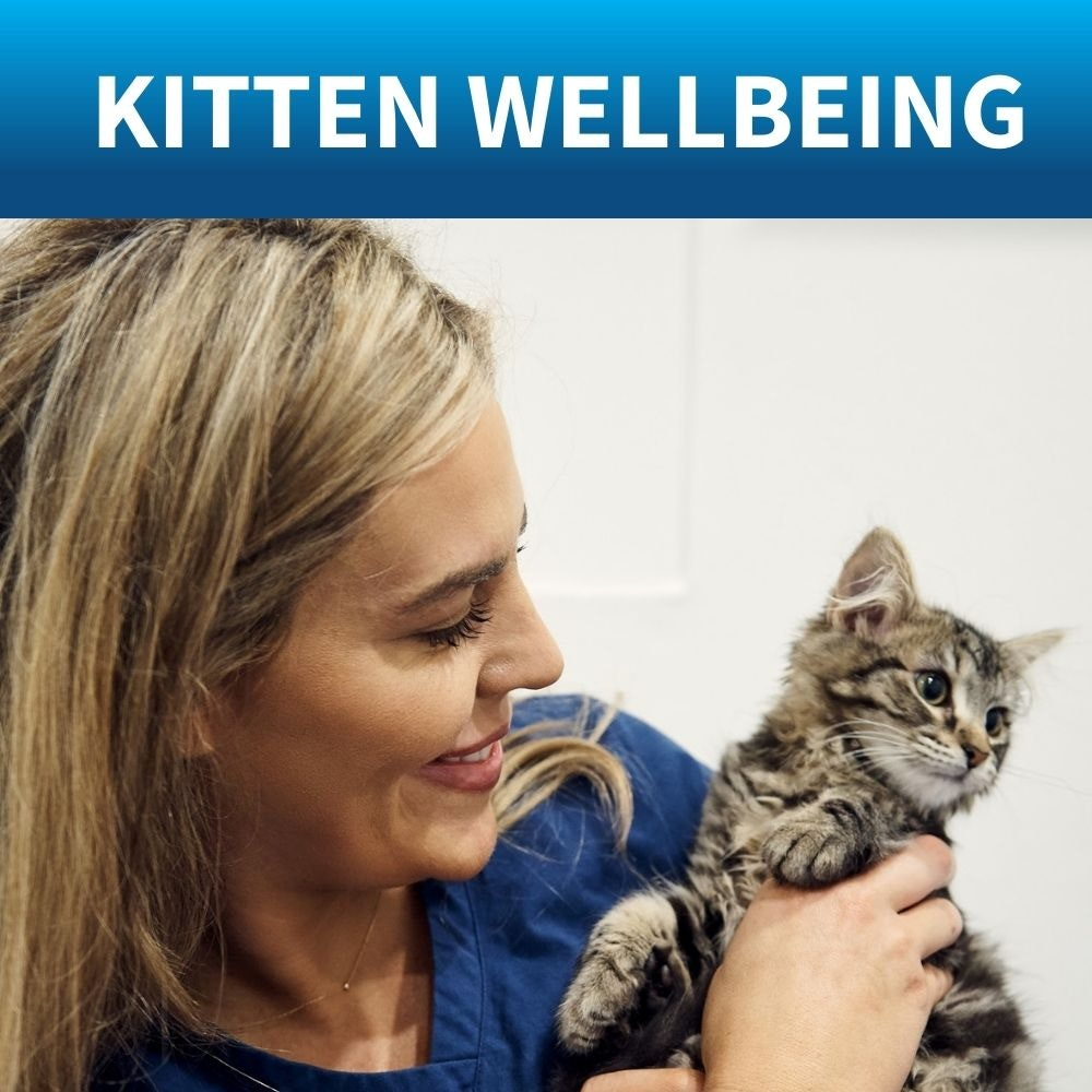 shop tick flea treatment kitten
