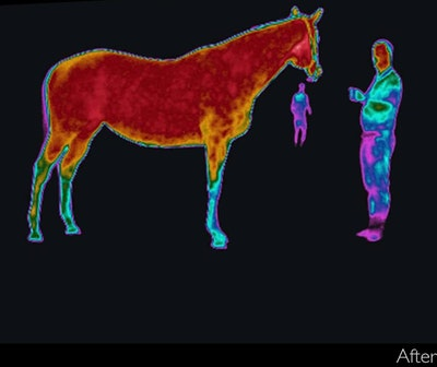 003-vitafloor-research-horse-vibration-platform-research-benefits-equine-vibrational-therapy-a2-jpg