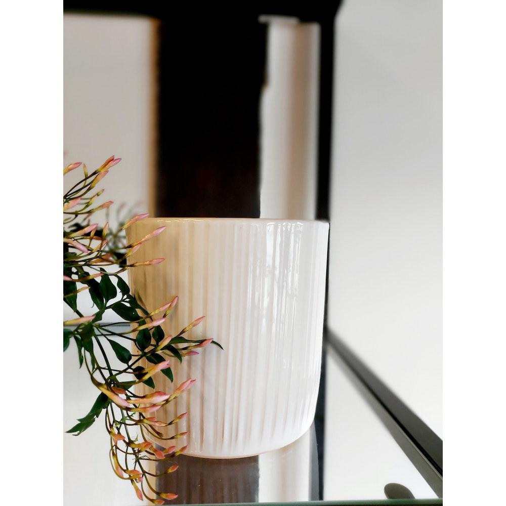 Pretty Cactus Plants  14cm Ceramic Sophie Pot - White