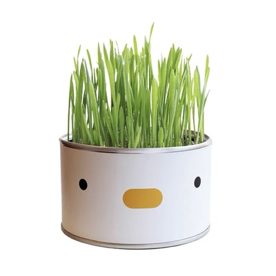 PURROOM Chick Canned Cat Grass