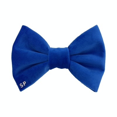 Swanky Paws Royal Blue Bow