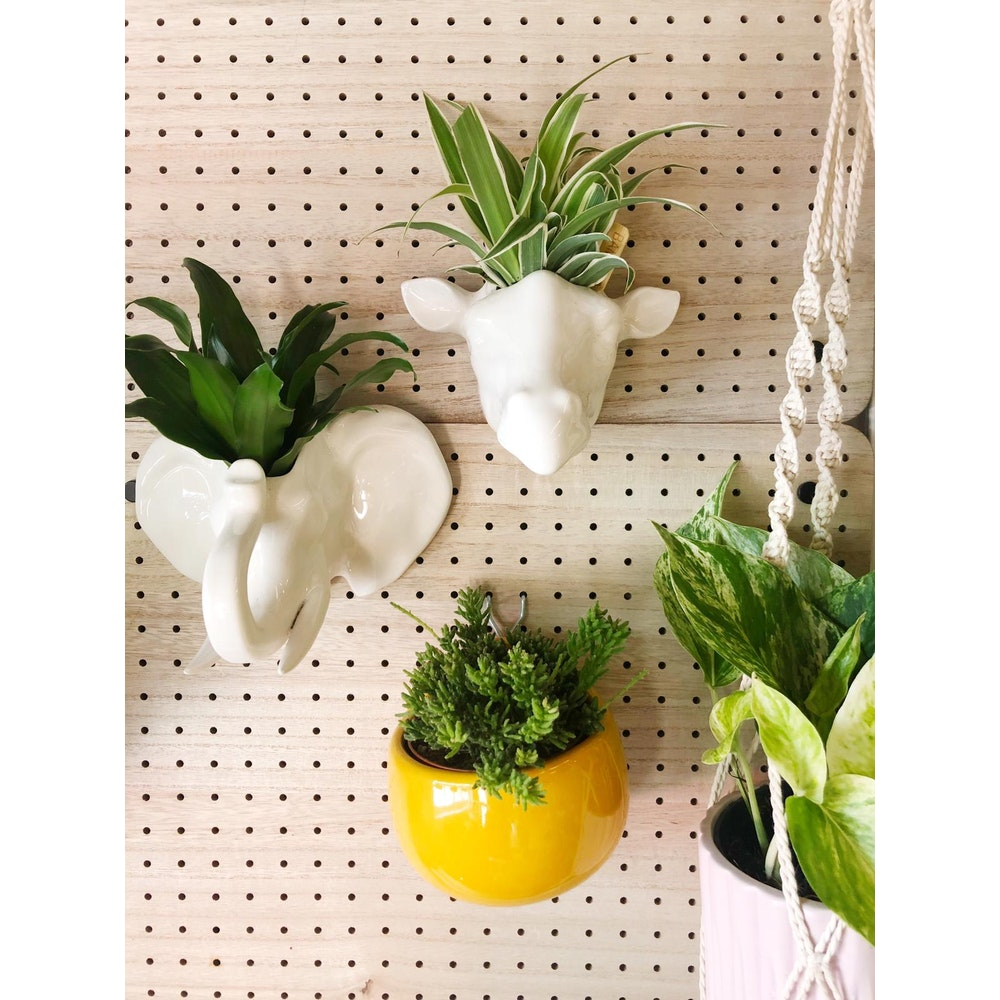 Pretty Cactus Plants  Elephant Ceramic Wall Planter - 17 X 11.5 X 10 Cm