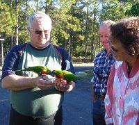 Feeding Lorikeets at The Lorikeet Tourist Park