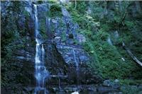 Minnamurra NP waterfall courtesy paul Blackmore Destination NSW