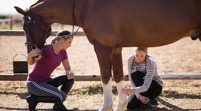 5 Principles Of Equine Exercise Physiology