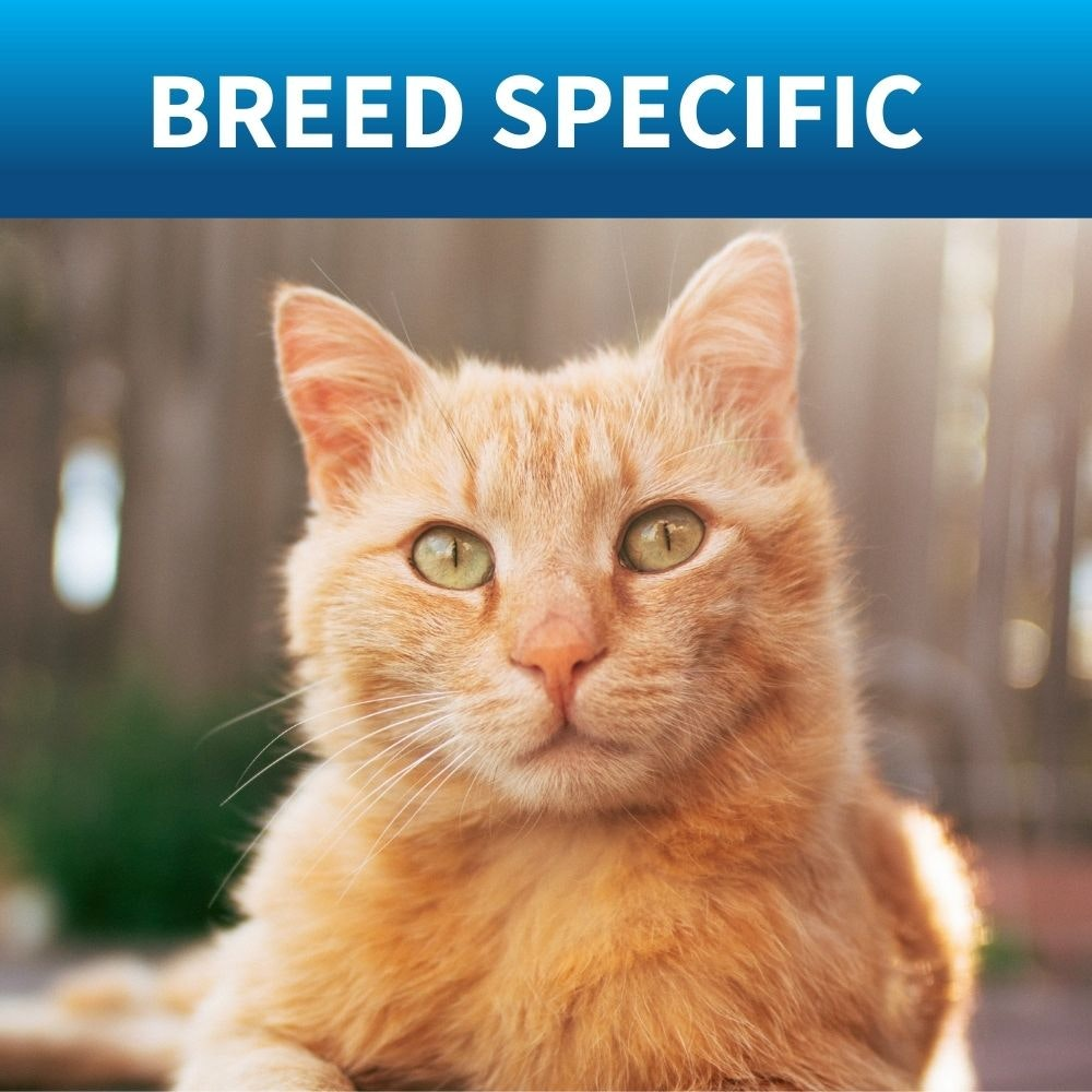 shop breed specific cat food by royal cannin on bondi pet