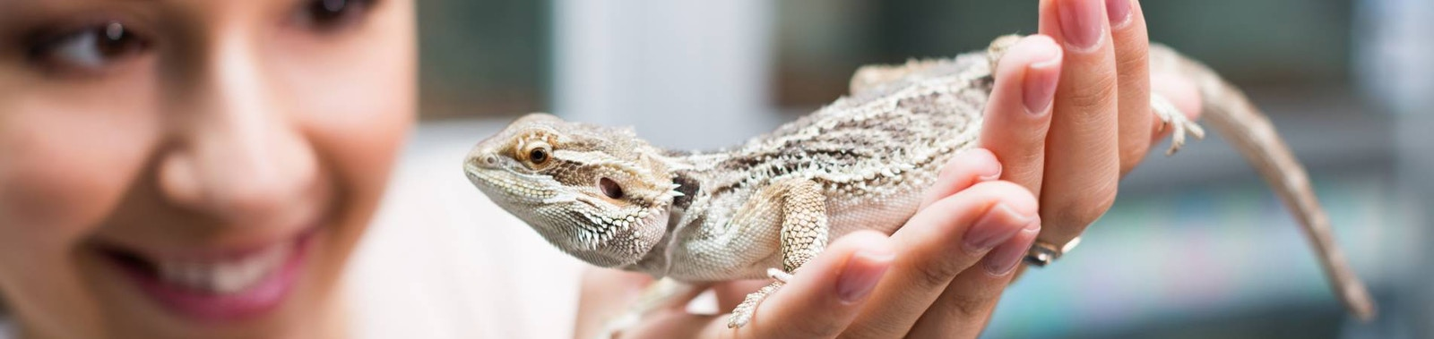 A Quick Guide to Caring for Your Reptile