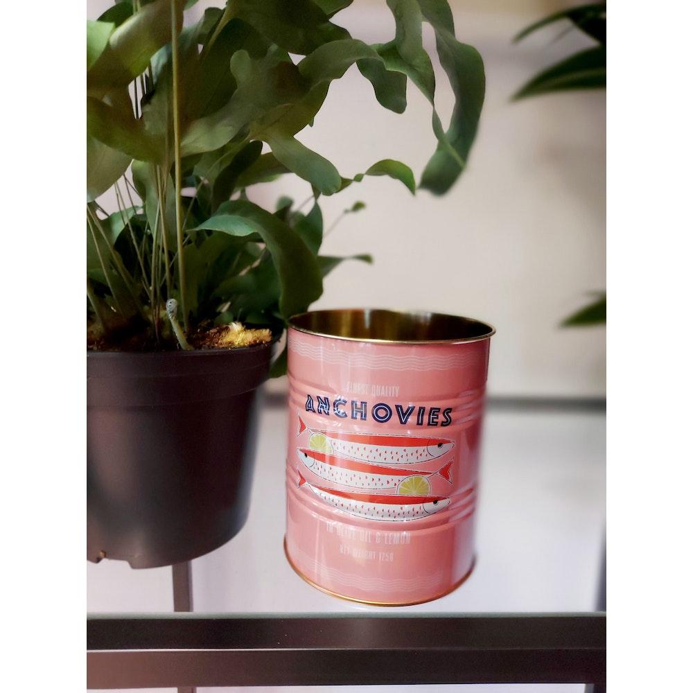 Pretty Cactus Plants  Pink Anchovies Tin Planter - 10 X 11cm