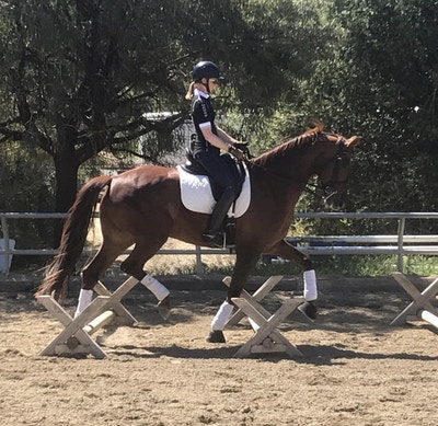 Amelia Newcomb: The USDF Young Horse Program