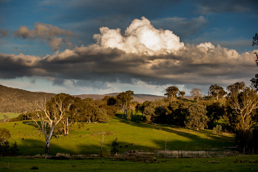 King Valley Scenery