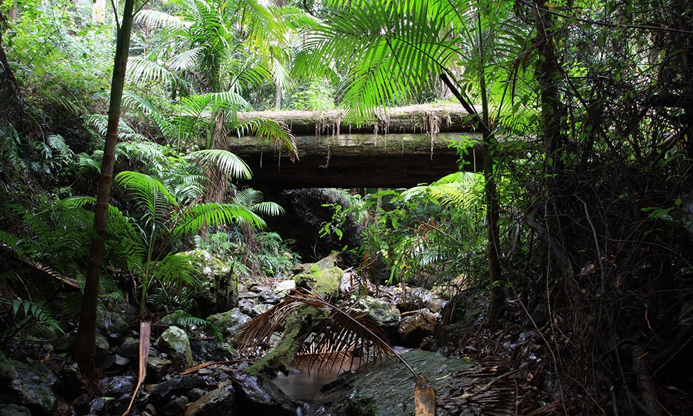 nambucca-heads-rainforest-jpg