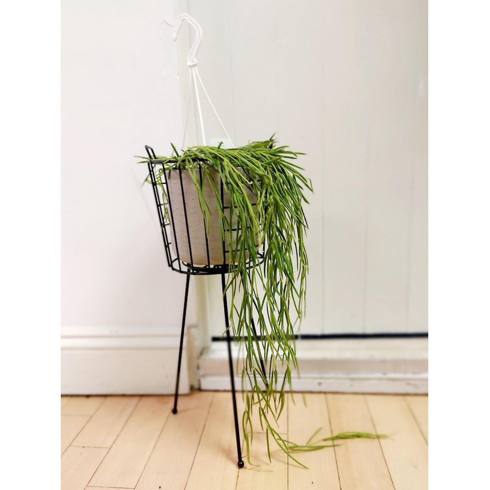 Pretty Cactus Plants  Medium Midar Black Pot Stand / Holder On Legs - 50 Tall X 19cm Diameter